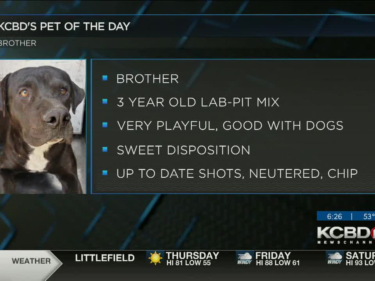 KCBD's Pet of the Day: Meet Brother
