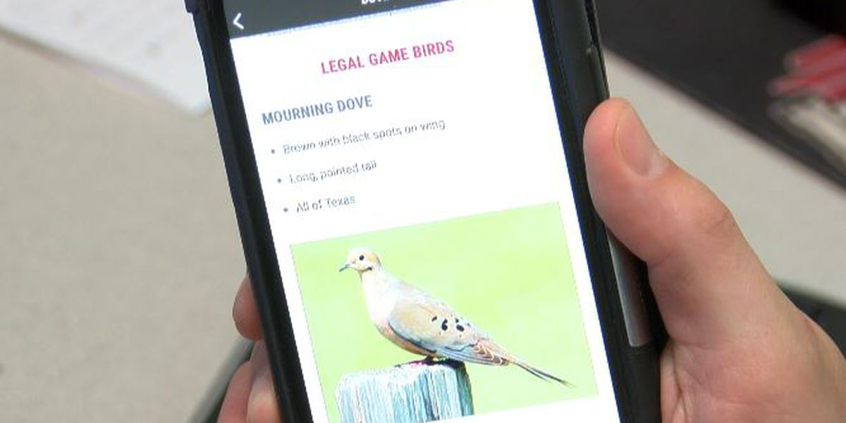 Dove hunting season starts on Sunday, with a new way to show your license