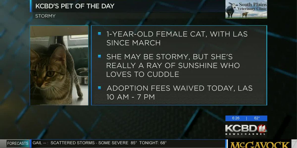 KCBD's Pet of the Day: Meet Stormy