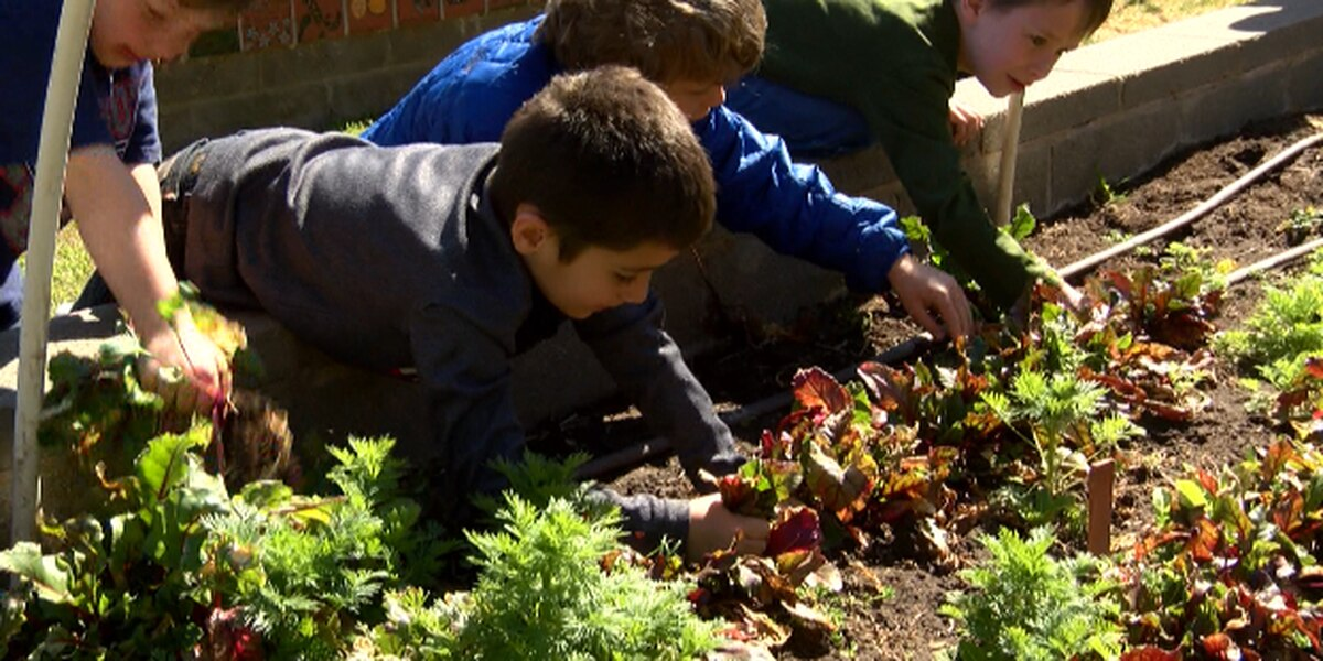 Lubbock students learning life lessons at hands-on gardening classes