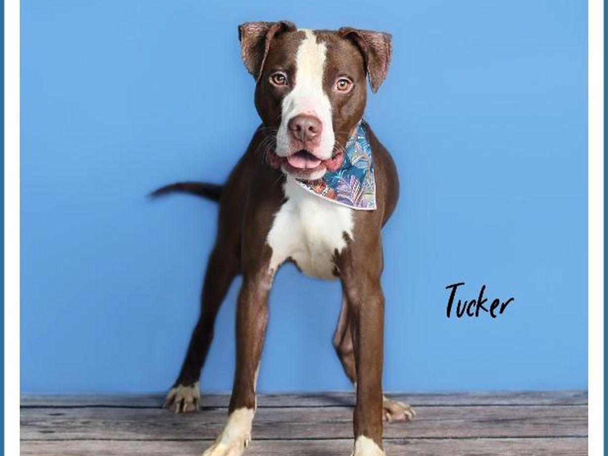 KCBD's Pet of the Day: Meet Tucker