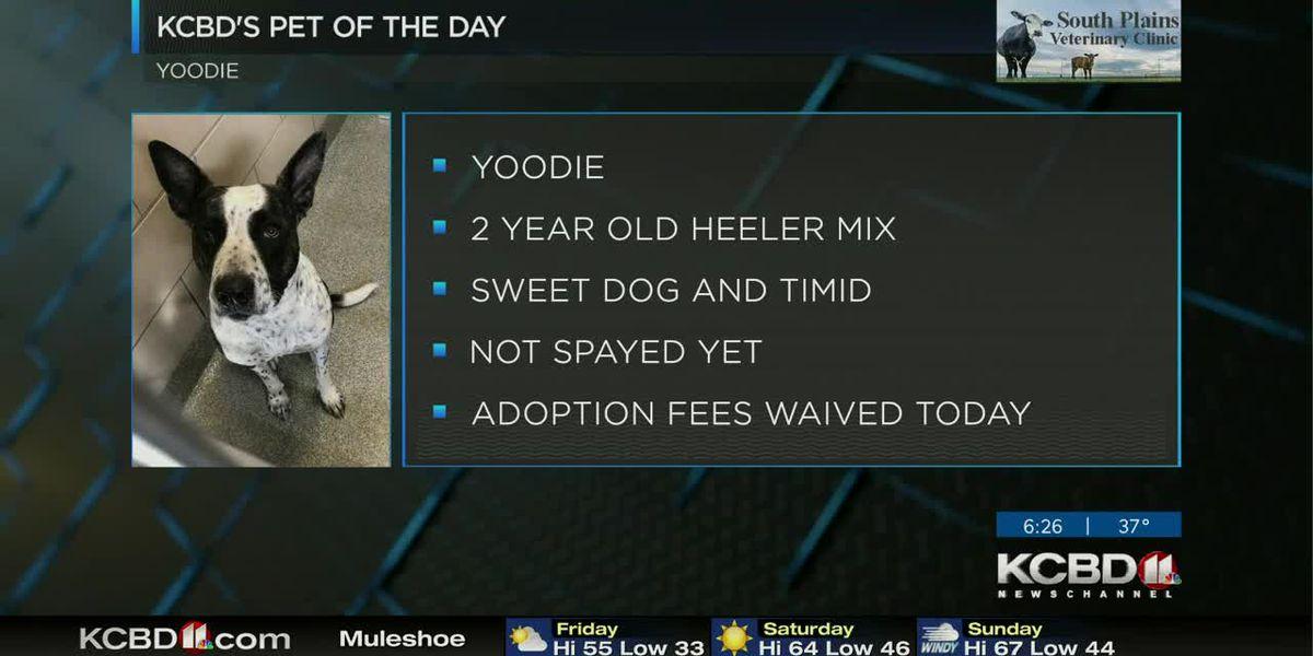 KCBD's Pet of the Day: Meet Yoodie